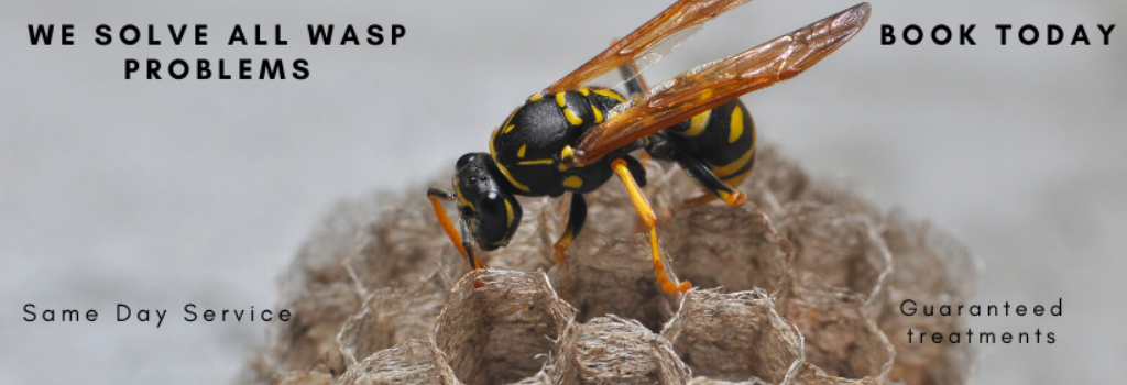 Wasp Exterminator Devon
